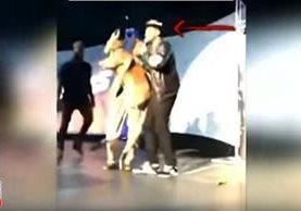 Un canguro puesto en escena durante un show en Detroit, Michigan, EE.UU., ha causado críticas contra un artista. (Foto Prensa Libre: Youtube)