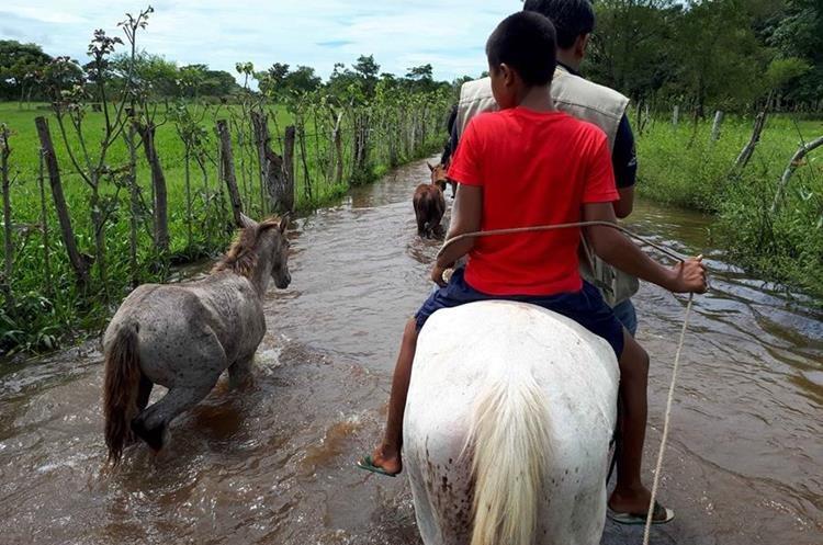 Los vecinos de la comunidad agraria Santa Isabel se transportan en caballo, debido a las inundaciones en los caminos.(Foto Prensa Libre: Rolando Miranda)
