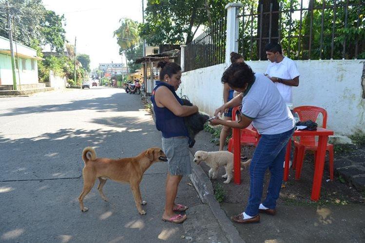 Trabajadora del Área de Salud vacuna un perro en la ciudad de Retalhuleu. (Foto Prensa Libre: Jorge Tizol)