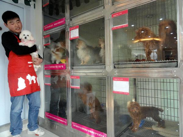 La prohibicion de tener perros como mascotas ha desatado revuelo en la provincia china de Dayang. (Foto: spanish.peopledaily.com).