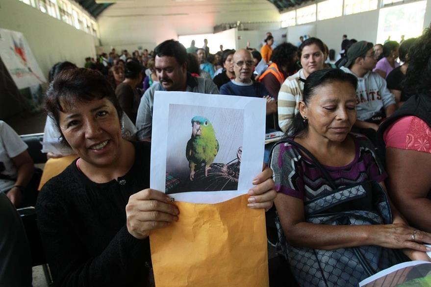 El plazo para legalizar la tenencia de mascotas ex—óticas nacionales vence el 15 de abril. (Foto Prensa Libre: Hemeroteca PL)