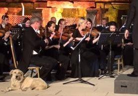 Perro fue la sensación en concierto de música clásica. (Foto Prensa Libre: Most Viral)