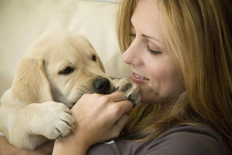 Hablarle al cachorro de manera tierna ayuda a su entrenamiento y buena conducta.