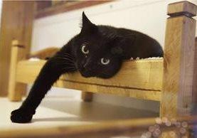 Nueva Jersey podría convertirse en el primer estado en prohibir a los veterinarios quitar las garras a los gatos. (Foto Prensa Libre: AP).