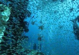 Estudian virus en el ecosistema. (Foto Prensa Libre: AFP)