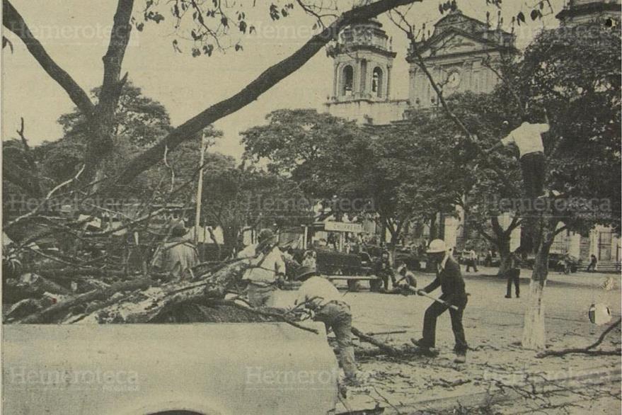 El 13/02/1984 la Municipalidad dispuso eliminar algunos árboles ya muy dañados. (Foto: Hemeroteca PL)