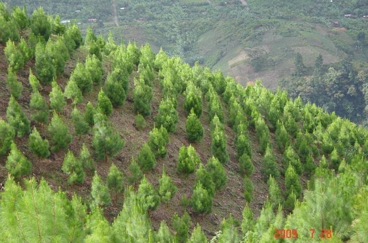 La recuperación de los bosques contribuye en la conservación de los suelos. (Foto Hemeroteca PL)