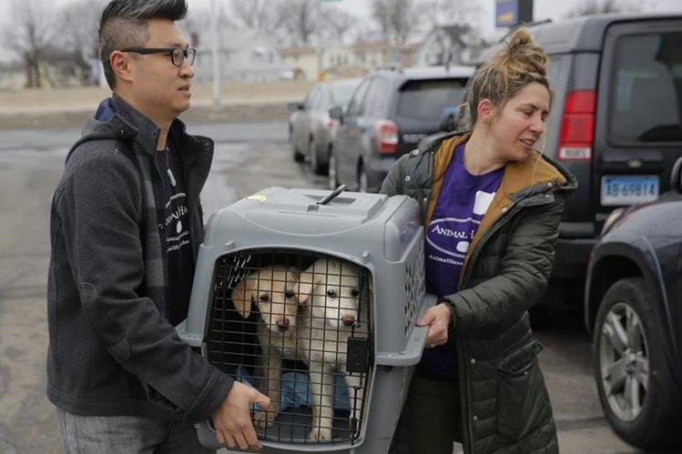 Activistas trasladan los perros rescatados a Nueva York. (Foto Prensa Libre: AP)
