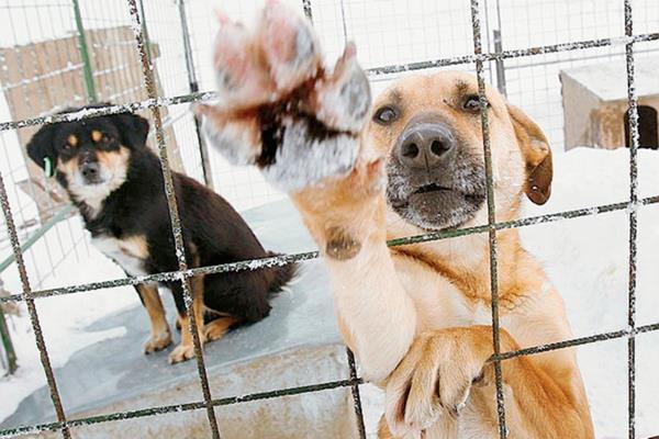 Foto de referencia. La crueldad contra los perros es común en Irán. (Foto Prensa Libre: Internet).