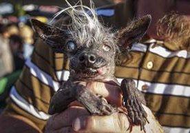 En California se llevó a cabo un peculiar concurso de canes.