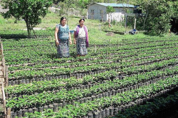Los cultivos han variado en los últimos años. (Foto Prensa Libre: Hemeroteca Pl)