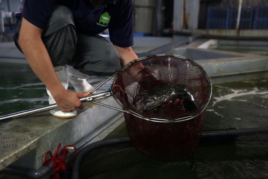 Pescados, cangrejos o almejas están omnipresentes tanto en los establecimientos de lujo como en los restaurantes más informales. (Foto Prensa Libre: AFP).