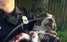 Policía carga a perra herida.