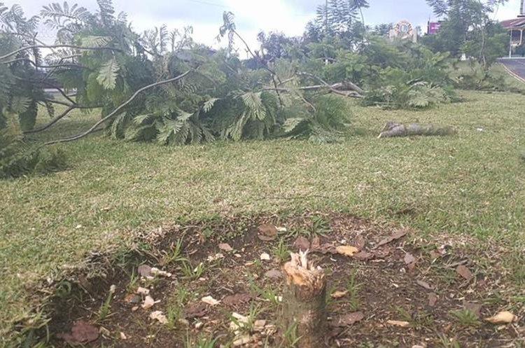 Los árboles del bulevar Juan Pablo II, zona 13, fueron cortados con hachas y machetes. (Foto Prensa Libre: Estuardo Paredes)