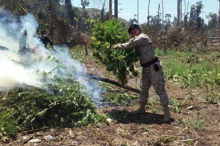 Un agente de Diprona enciende matas de marihuana durante el operativo en Petén, llevado a cabo en la zona de adyacencia con Belice. (Foto Prensa Libre: Rigoberto Escobar)