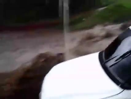 Un picop es arrastrado por la fuerte corriente. (Foto Prensa Libre: Facebook)