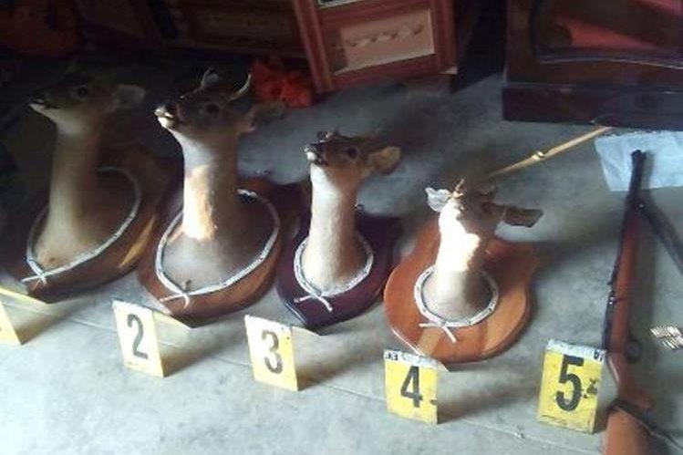 Cabezas decomisadas en un cateo en Jalapa. (Foto Prensa Libre: PNC).
