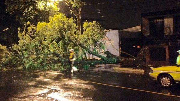 Un árbol cayó en la 11 avenida y 9 aclale zona 2, reportaron los Bomberos Municipales. (Foto Prensa Libre: @amilcarmontejo)