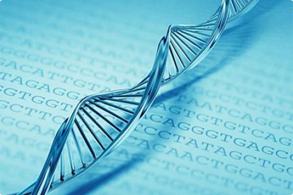 <p>Investigadores españoles descubren cómo proteger el ADN</p>