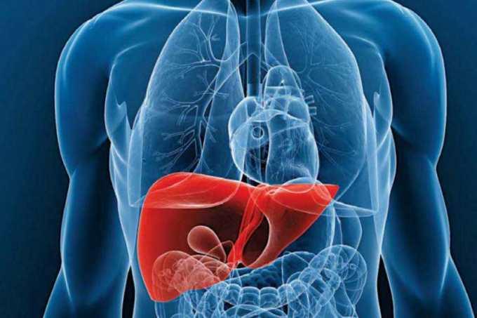 El hígado bioartificial podría permitir a los médicos tratar y prolongar la vida de mayor cantidad de pacientes. Foto Prensa Libre, tomada de lineaysalud.com)