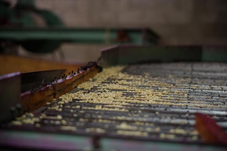La planta de procesamiento de semillas está localizada en Chiquimula. (Foto Prensa Libre: Cortesía FAO)