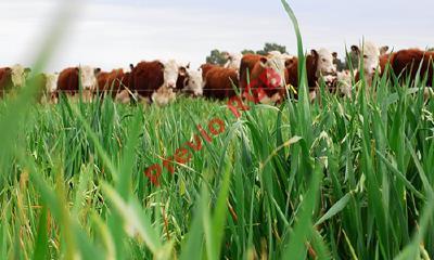 El sector GANAdero genera 14.5 por ciento de los gases de efecto invernadero (fOTO: hEMEROTECA pl).
