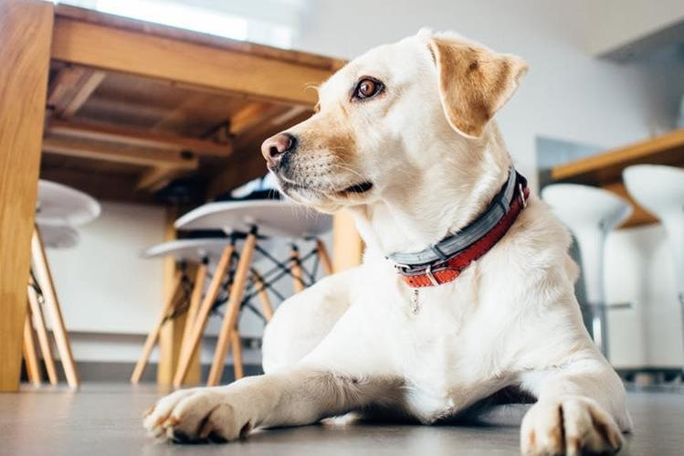 La ley impulsada por un diputado de Novosibirsk, Rusia, busca prohibir los ladridos de perros entre las 22 horas y las 7 horas del día siguiente. (Foto HemerotecaPL)