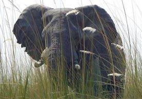 El ataque de un elefante en un parque natural en India le causó la muerte a un joven. (Foto: HemerotecaPl)