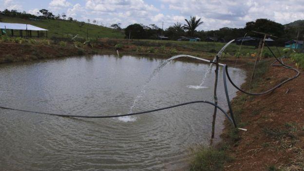 Cerca de donde estará el hotel, los exrebeldes también crearon un estanque para la piscicultura.
