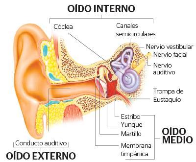 Infografía de las partes del oído. (Infografía Prensa Libre: Ástrid Méndez)