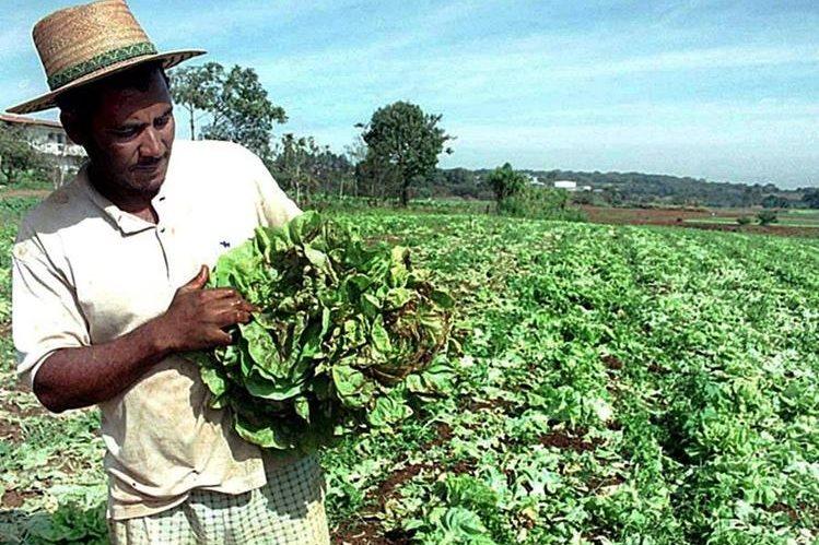 Agricultores y ganaderos hondureños están alarmados por El Niño.