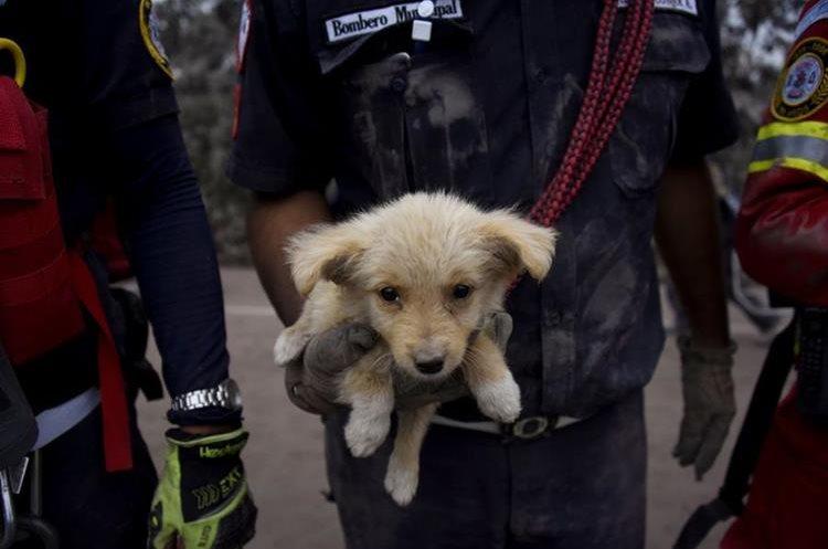 Varios animales domésticos y mascotas han sido rescatadas en San Miguel Los Lotes. (Foto Prensa Libre: AFP)