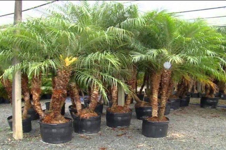 Costa rica toma medidas tras cierre de mercado europeo a for Todas las plantas son ornamentales