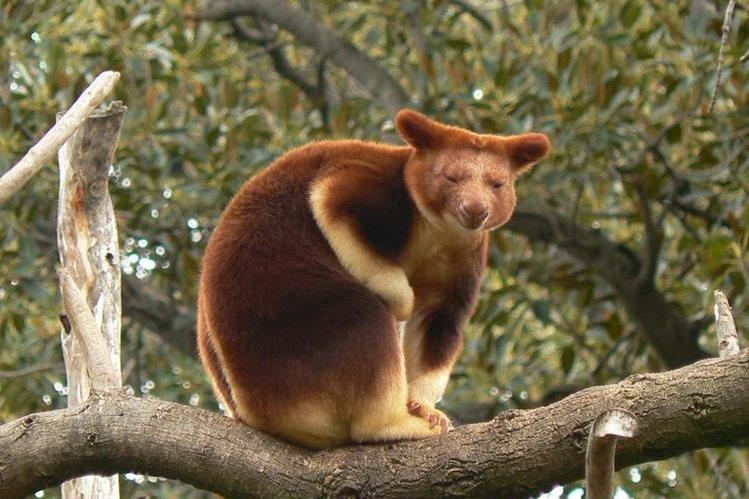 """El canguro """"Patty"""" era también un """"artista"""", según el zoológico."""